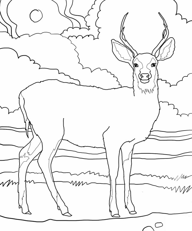deer coloring pages - photo#16