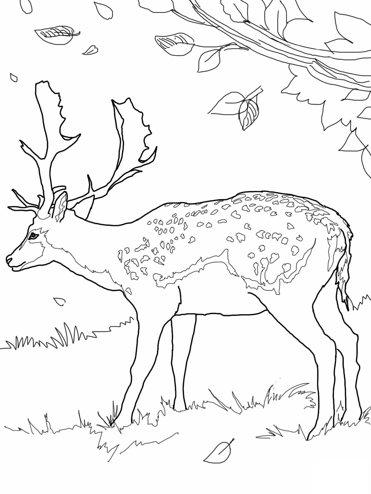The gruffalo colouring pages to print - Deer Printable Coloring Pages
