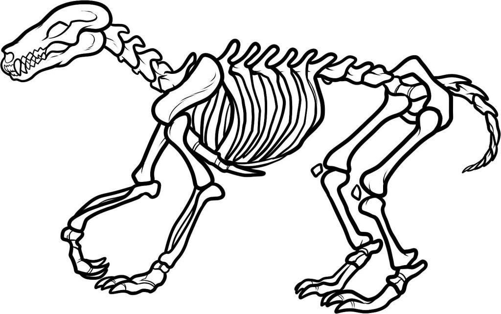 free axial skeleton coloring pages - photo#30