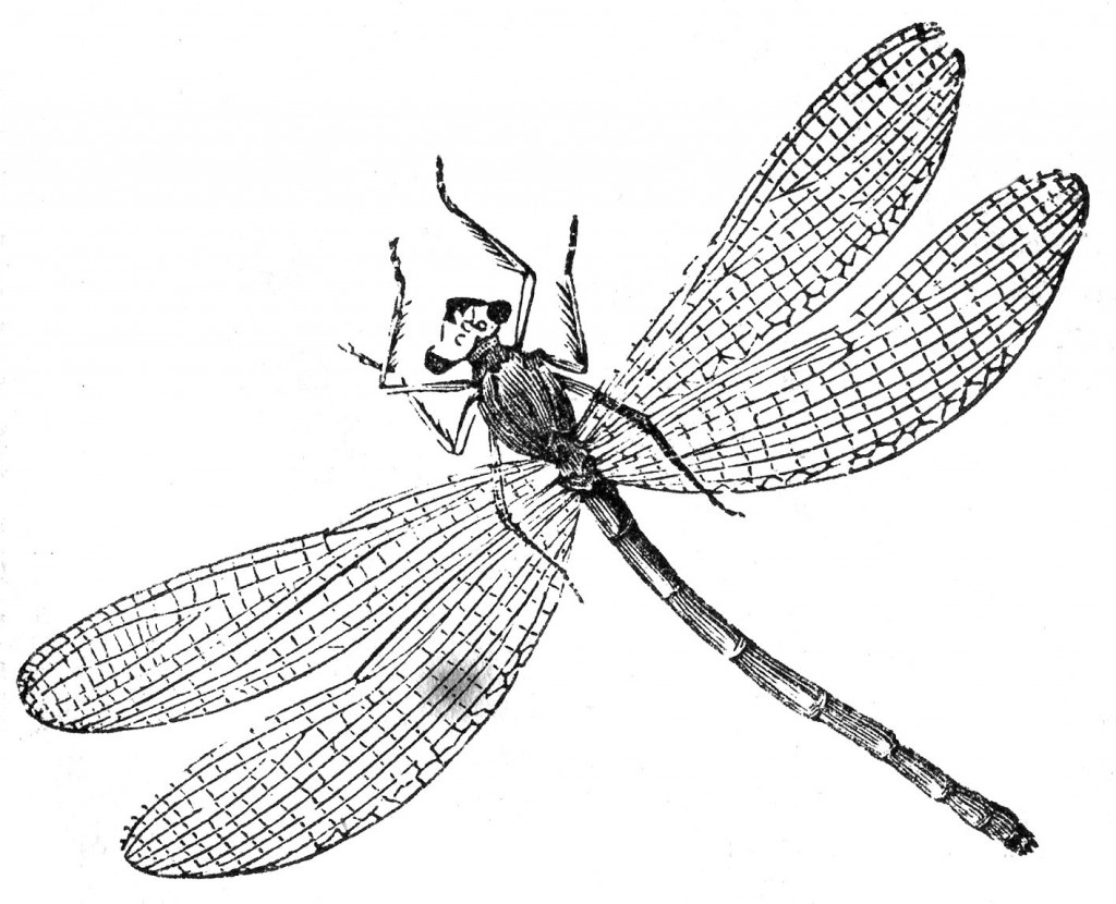 Dragonfly Coloring Pages Printable For Kids