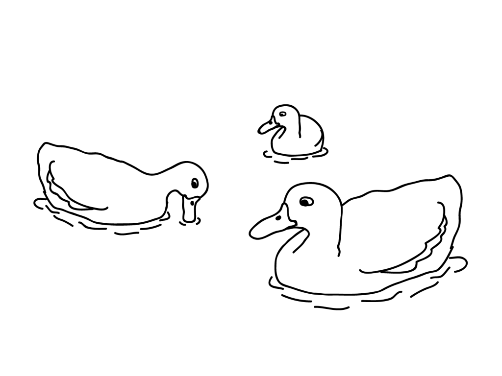 Duck Coloring Pages In The Water