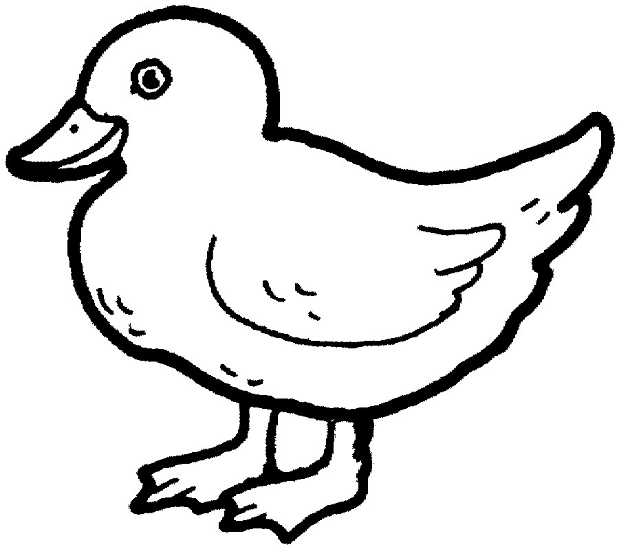 Duck Coloring Pages Kids