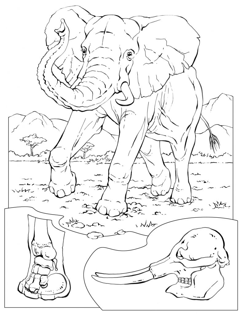 Free printable elephant coloring pages for kids for Coloring pages toddler