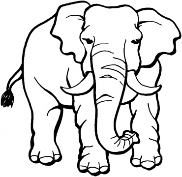 Elephants Coloring Pages