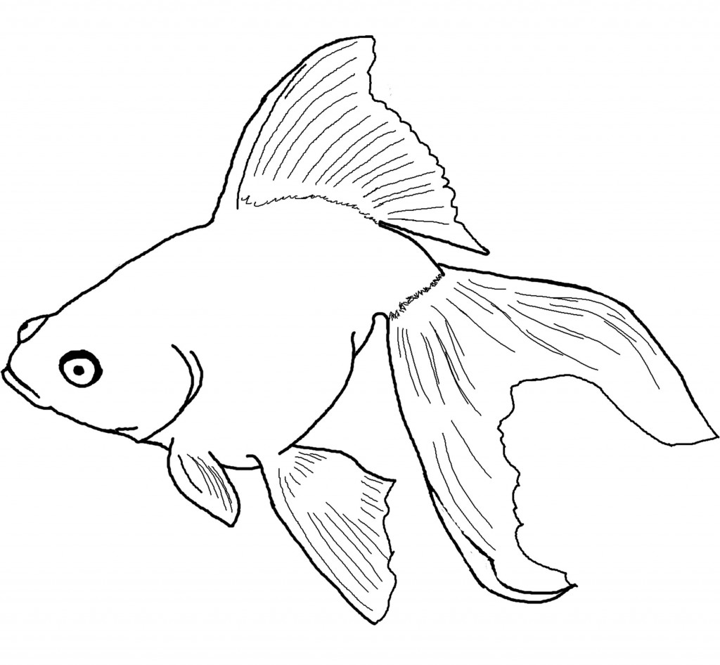 fish coloring pages free - photo#36