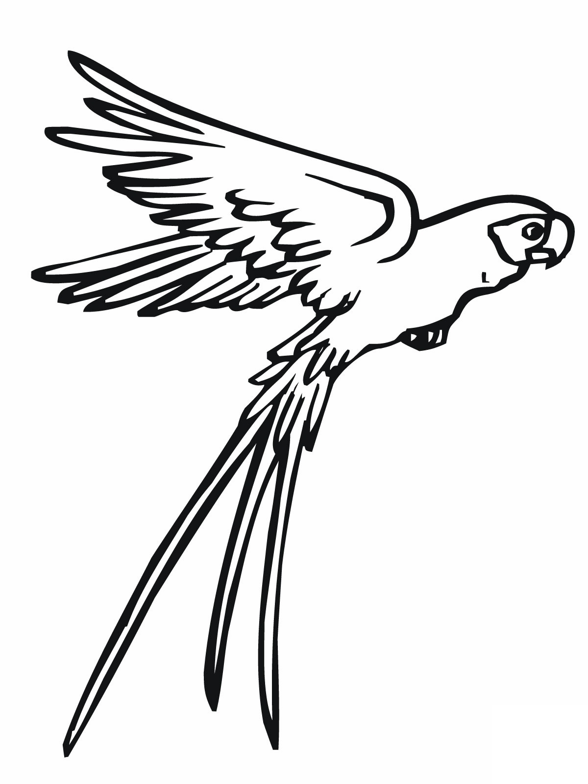 parrot coloring pages bird - photo#22