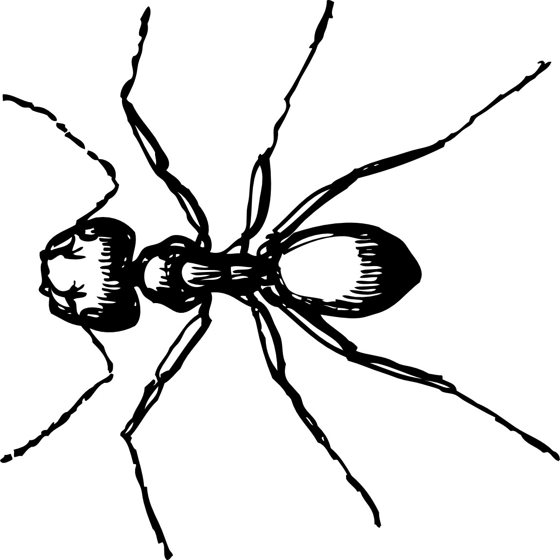 free ant clipart black and white - photo #24
