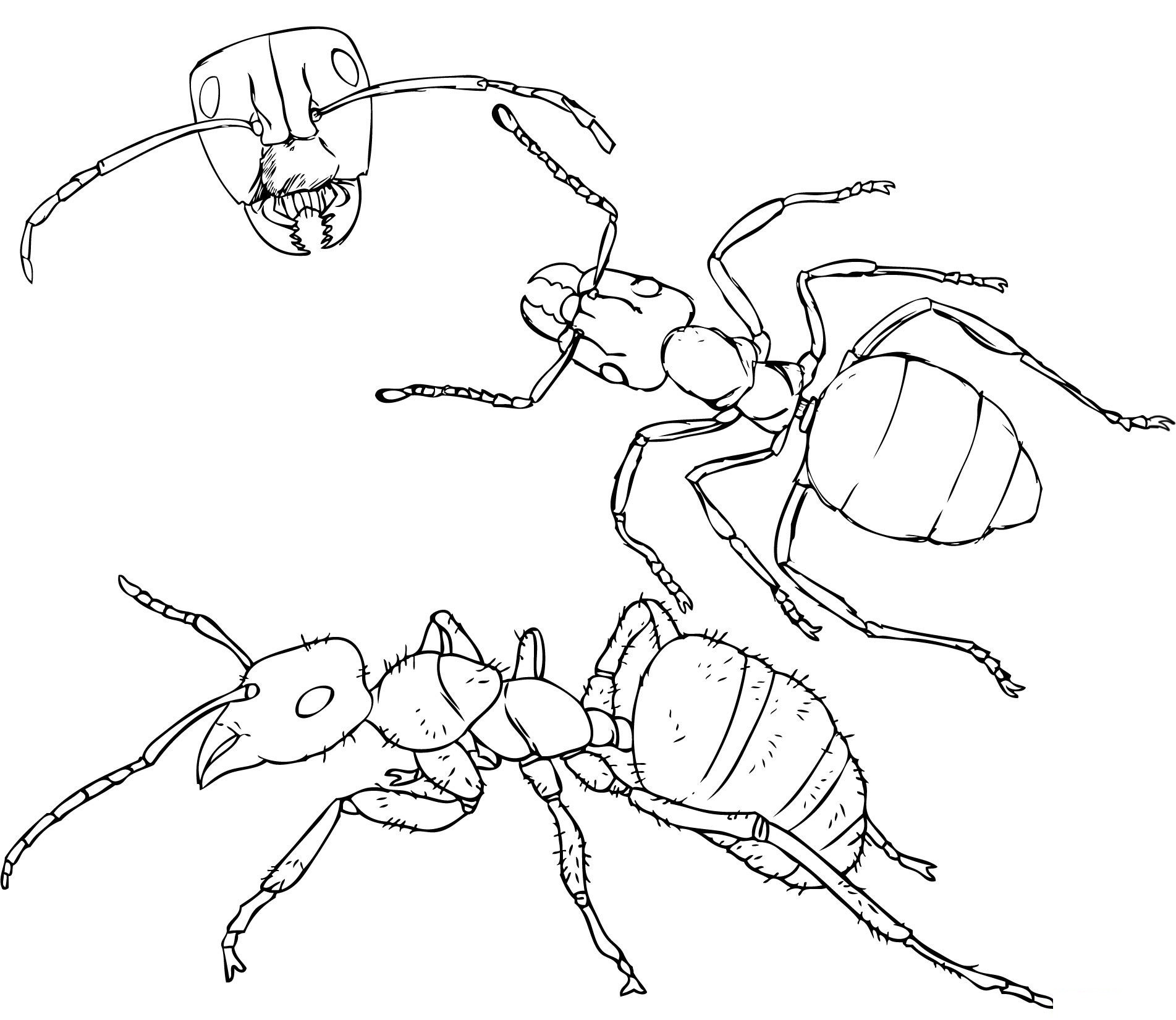 Clip Art Ants Coloring Page free printable ant coloring pages for kids pages