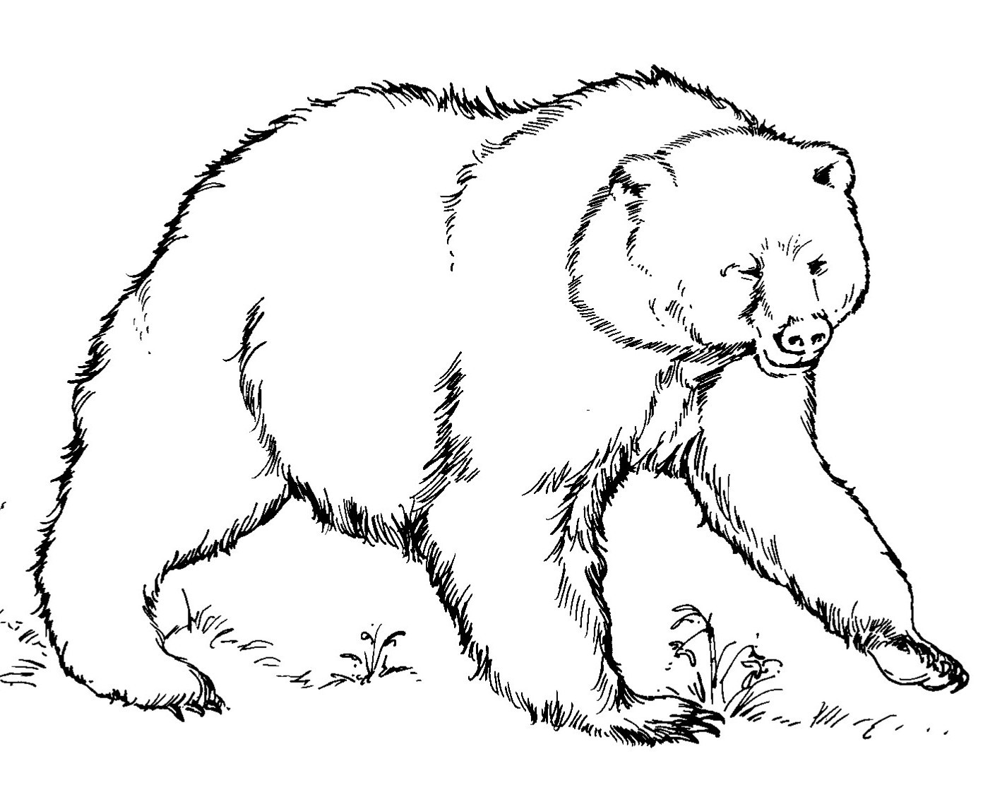 Polar animals coloring pages for kids - Free Bear Coloring Pages