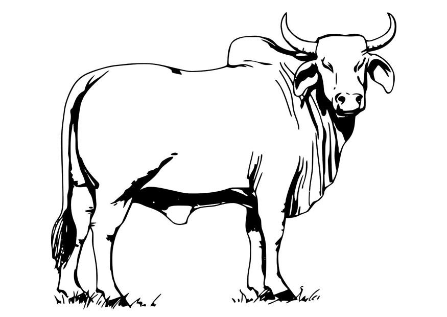 free printable cow coloring pages for kids Benny the Bull Coloring Pages  Bull Coloring Pictures