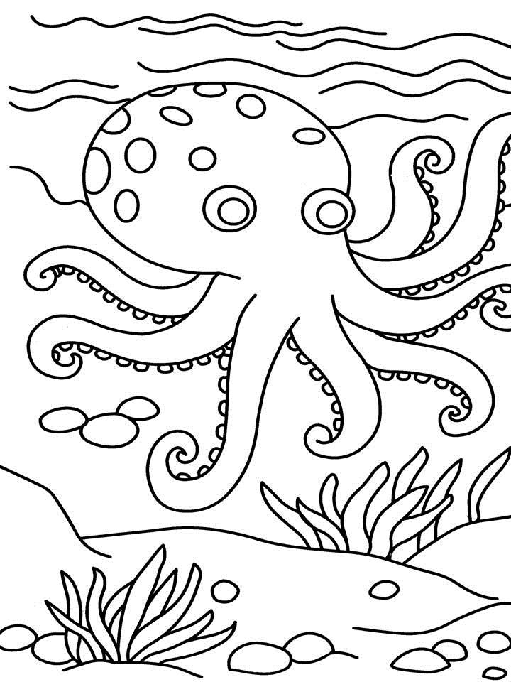 free octopus coloring pages - Drawing Sheet For Kids