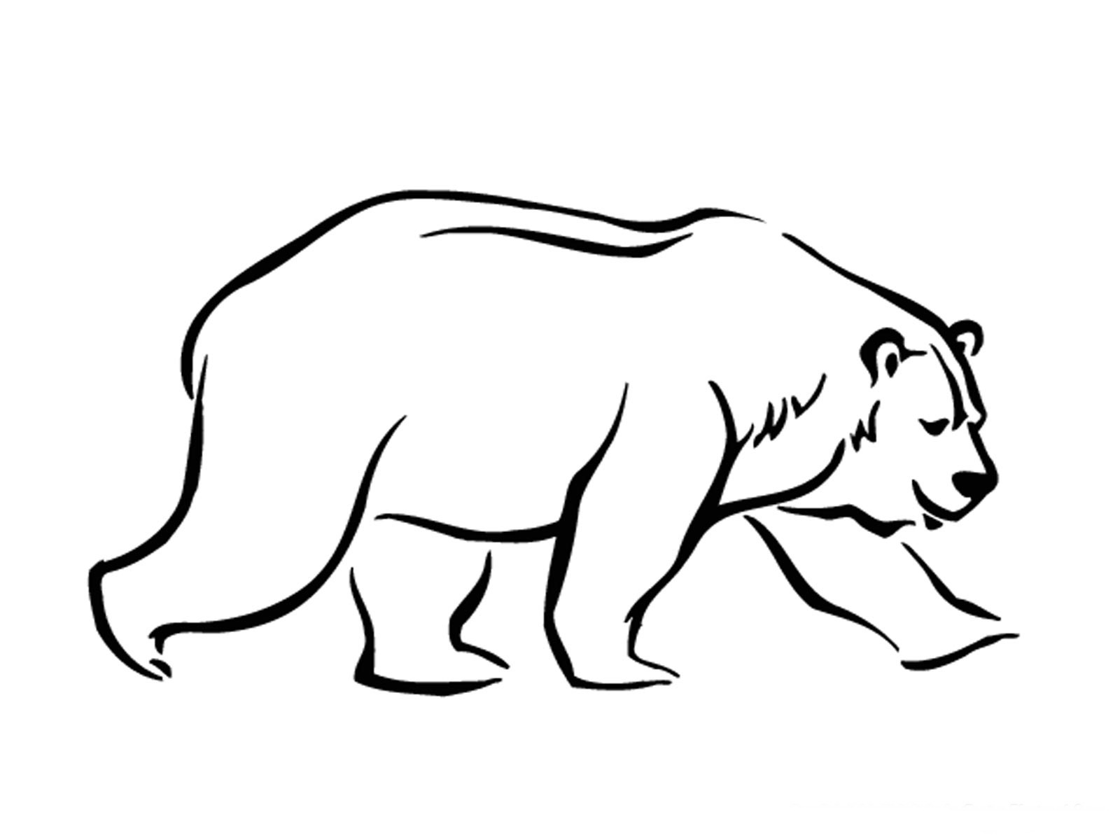 Polar animals coloring pages for kids - Free Polar Bear Coloring Pages