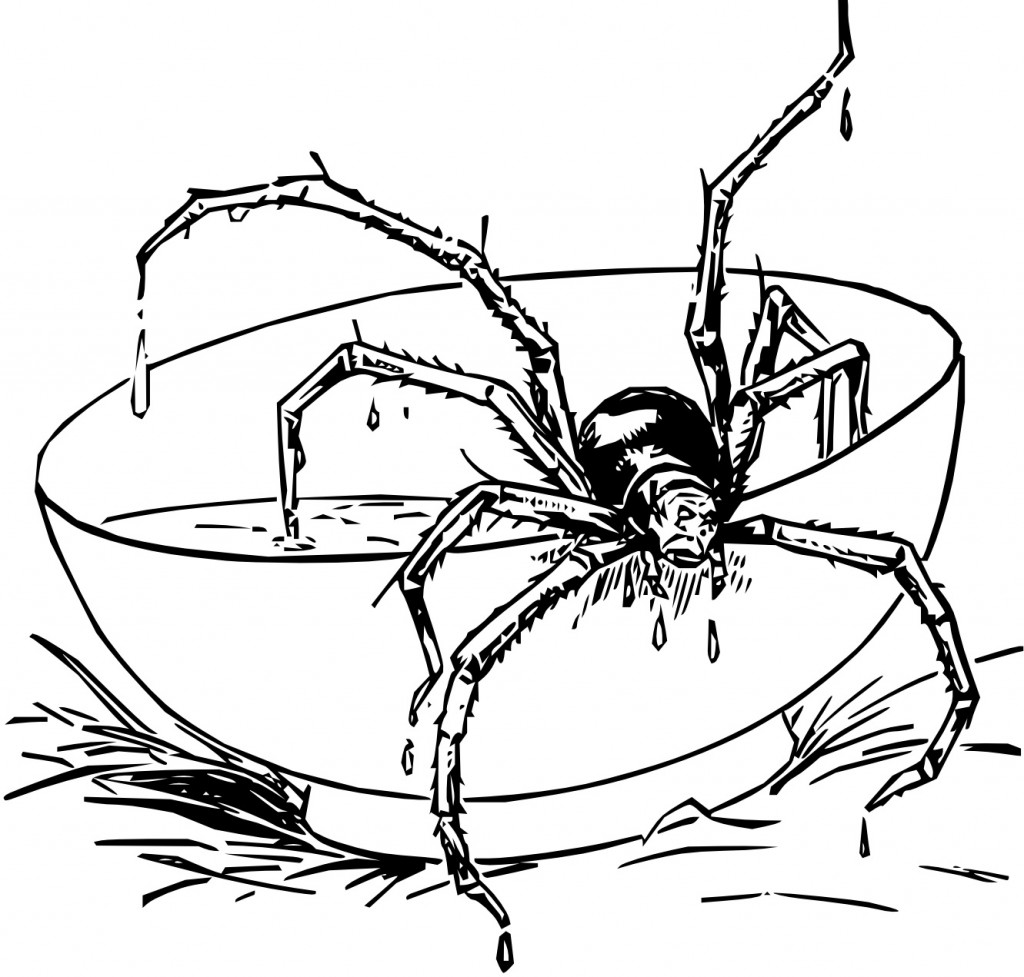 Free Spider Coloring Pages
