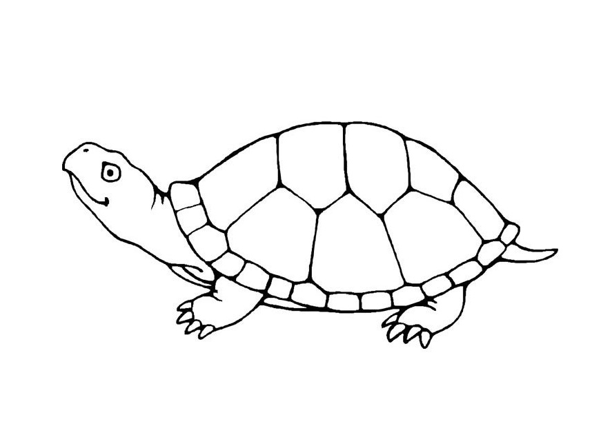 free coloring turtle pages - photo#3