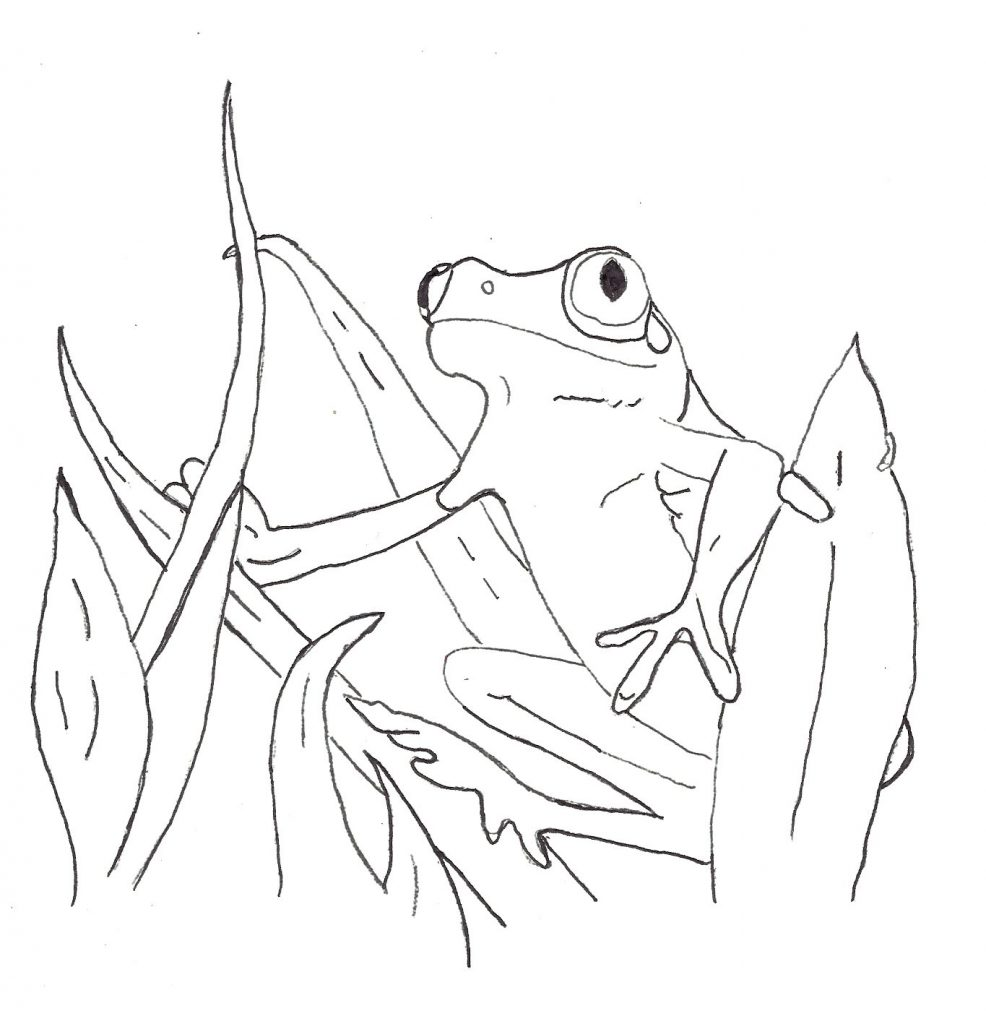 Frog Coloring Pages For Kids Printable