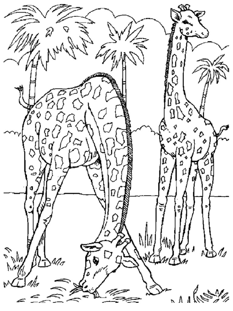 free giraffe coloring pages - photo#20