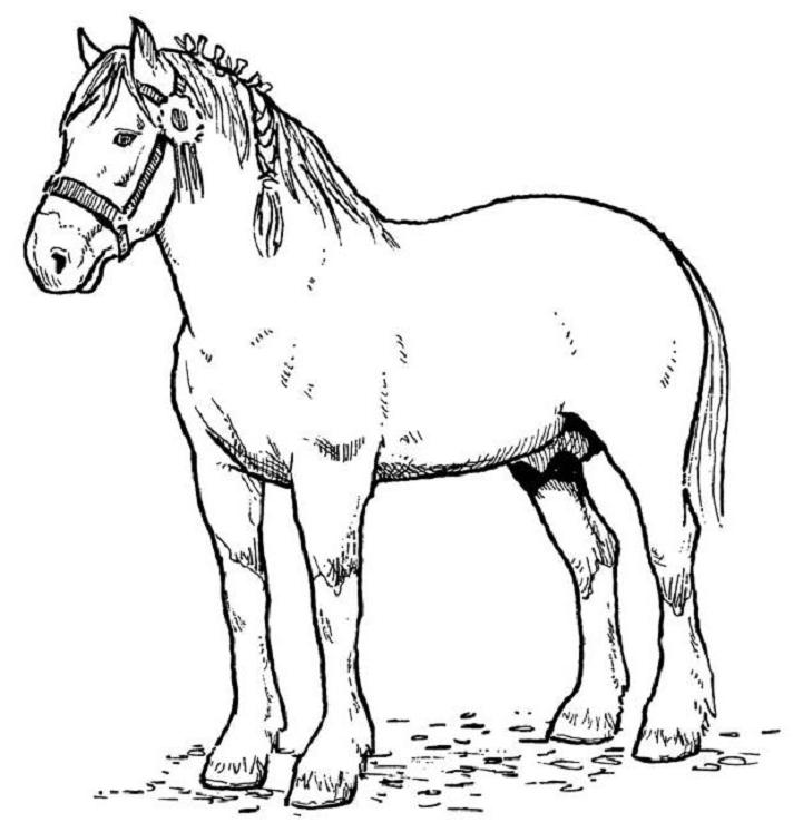 coloring book pages of horses - photo#4