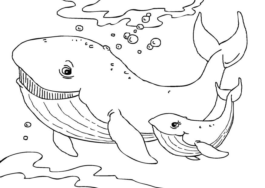 whale coloring book pages - photo#5