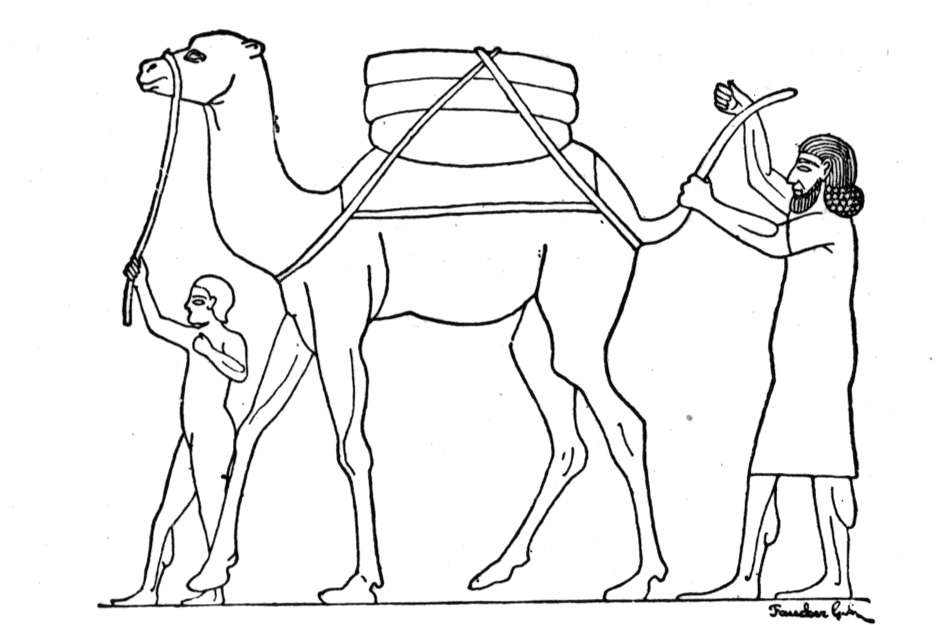 camel coloring pages for kids - photo#35