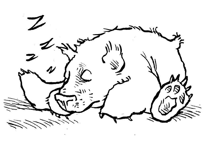 Koala Bear Coloring Pages For Kids