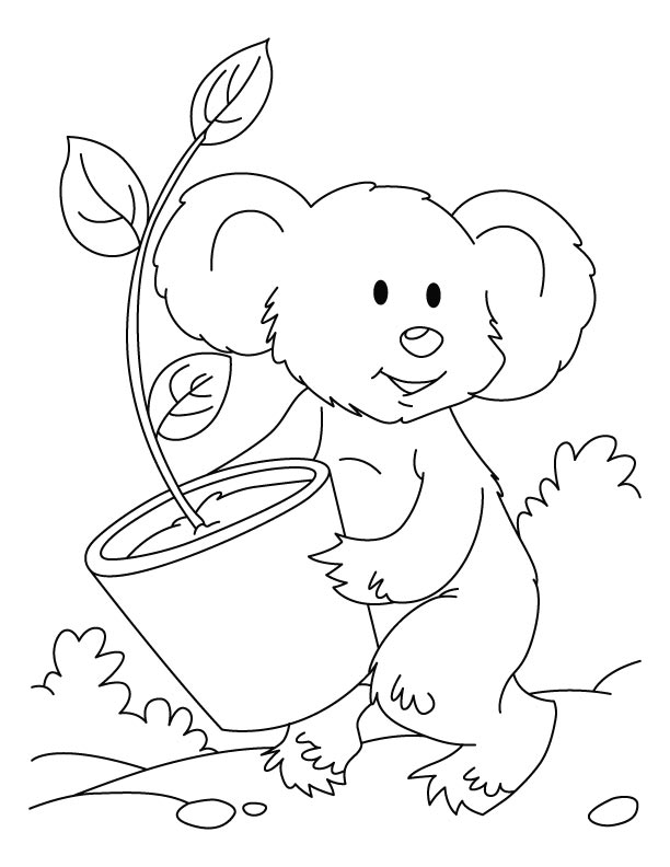 koala bear coloring pages - photo#8