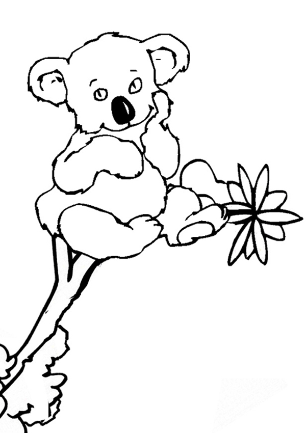 Coloring Pages Koala : Free printable koala coloring pages for kids