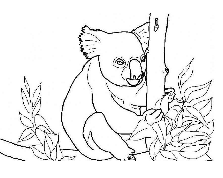 k is for koala bear coloring pages - photo #36