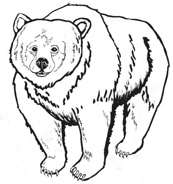 black bear coloring pages printable - photo #6