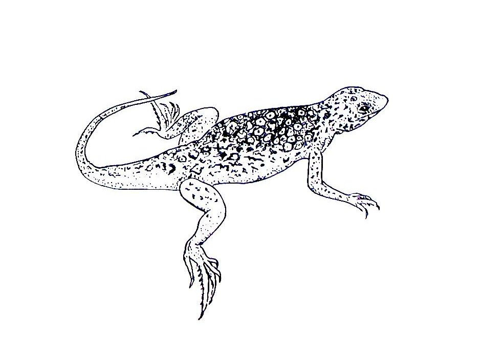 Lizard Coloring Pages Free Printable