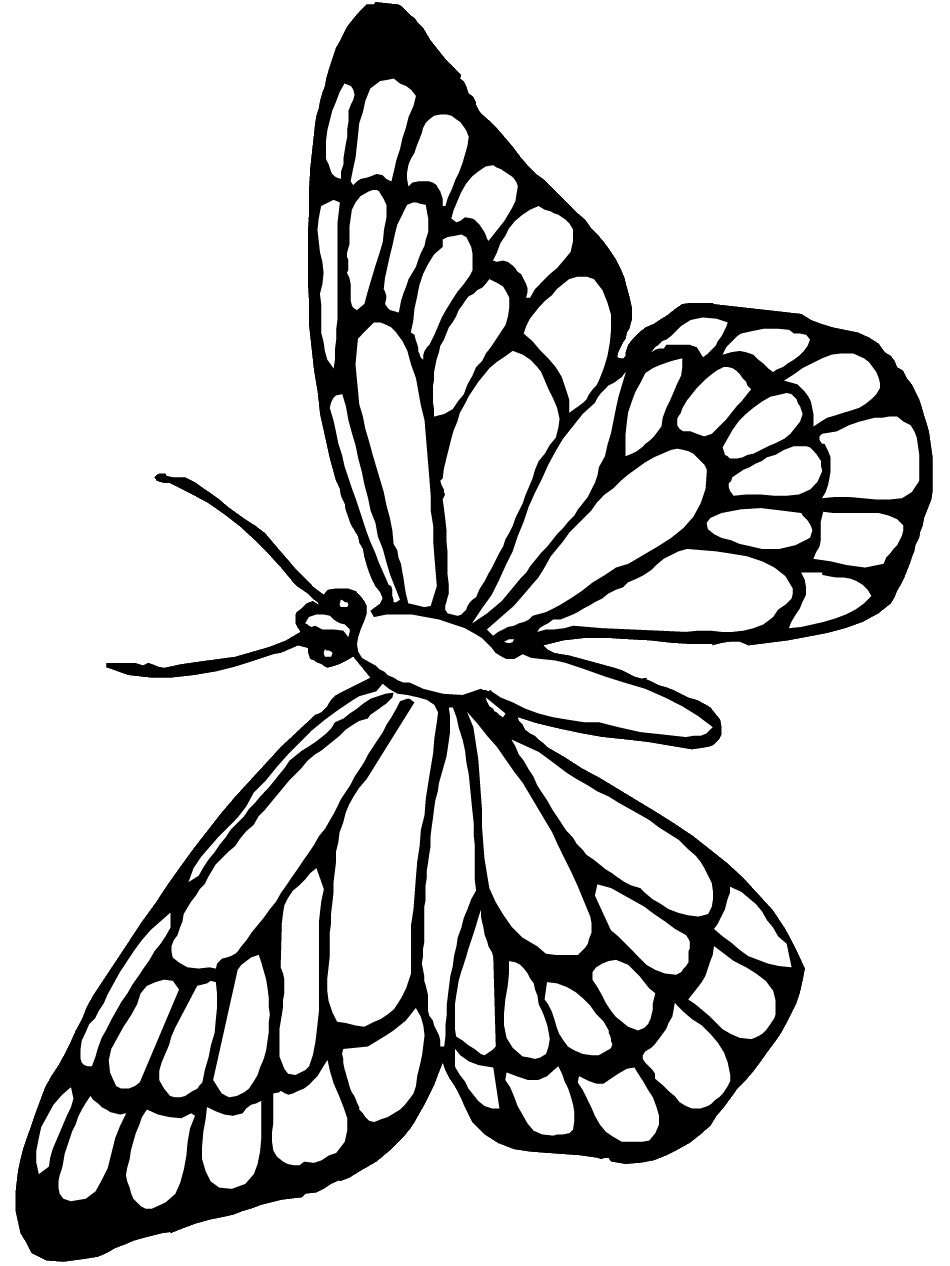 Free printable butterfly coloring pages for kids for Butterfly template free