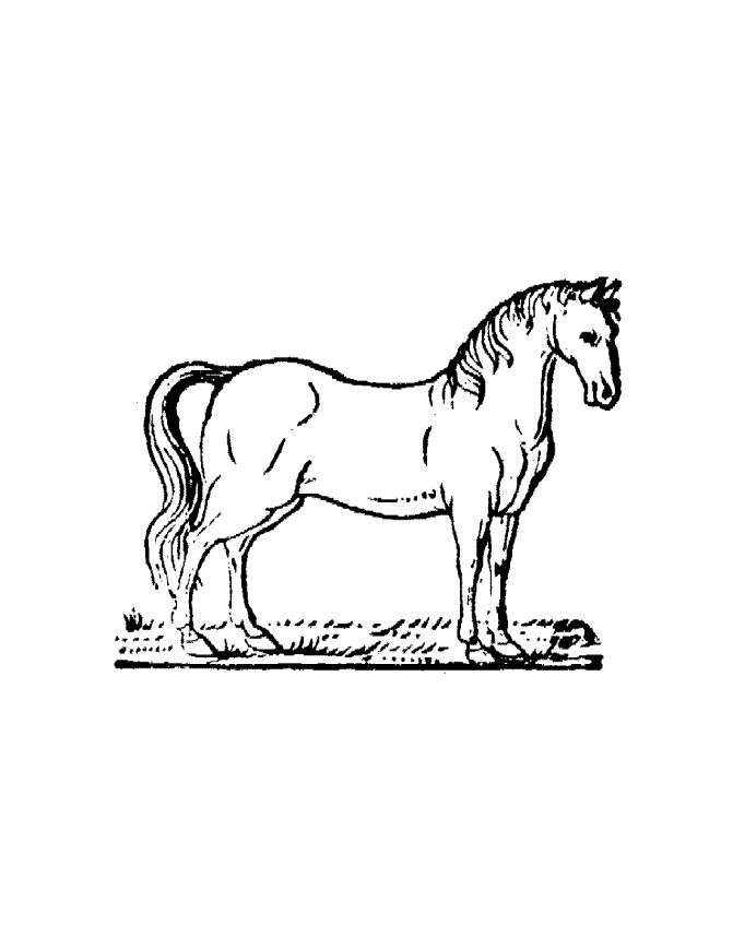 free coloring pages online horses - photo #4