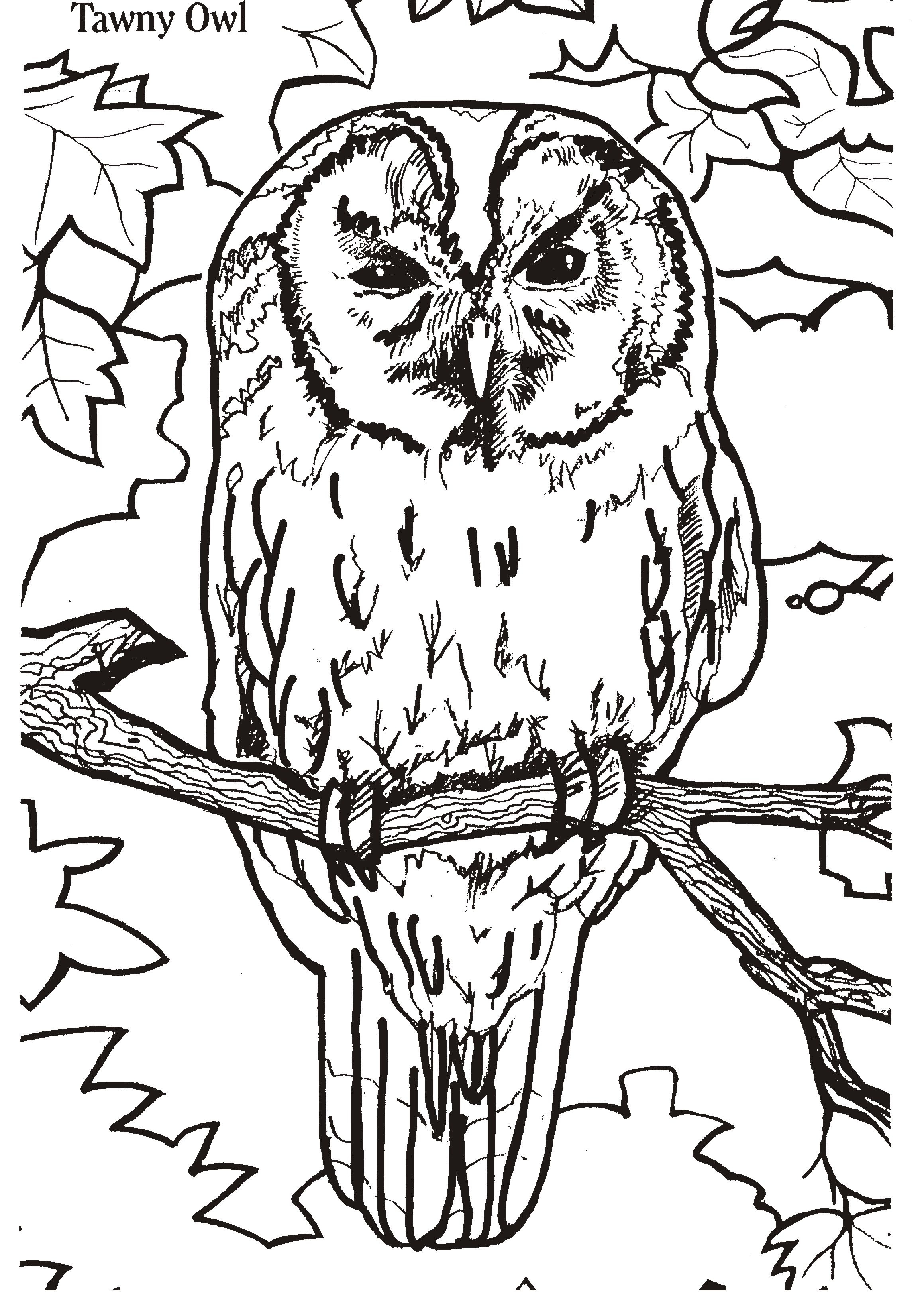 Amazoncom The Eclectic Owl An Adult Coloring Book