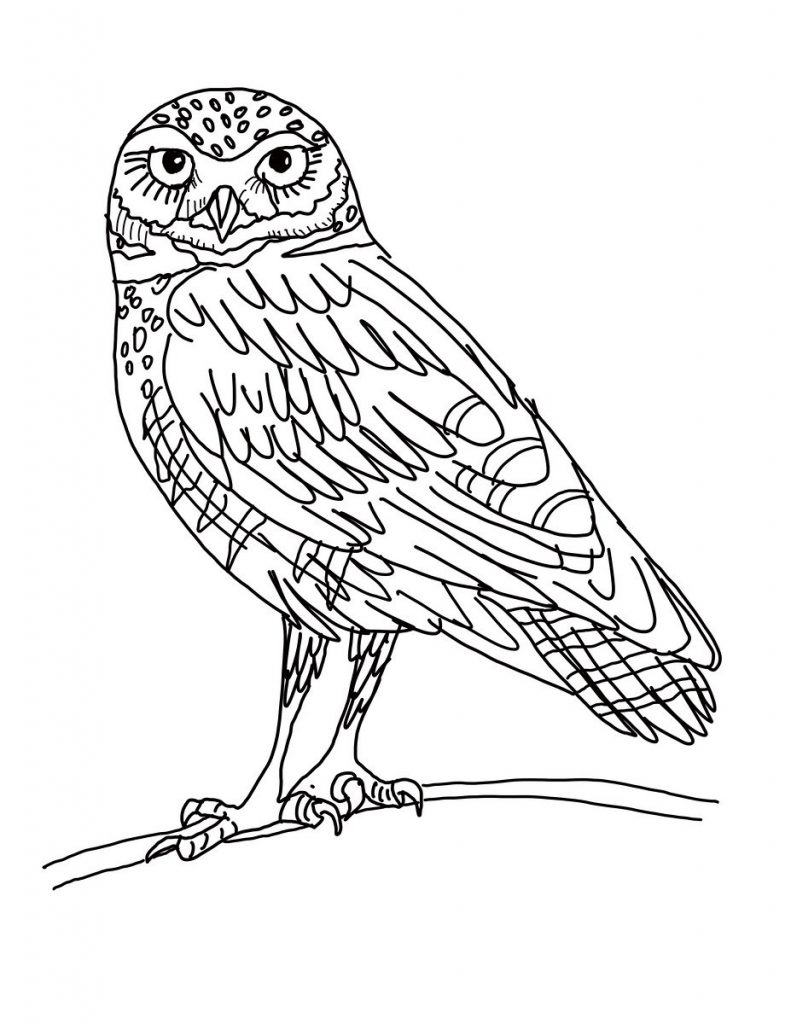 Owl Printable Coloring Pages