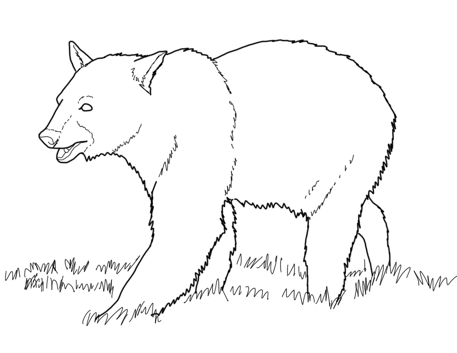 Bear drawing for kids