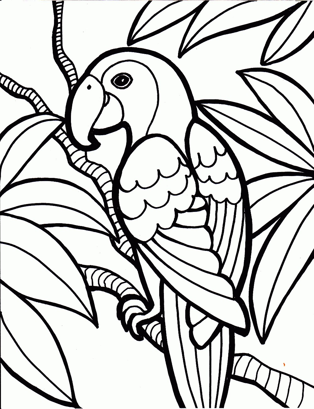 parrot birds coloring page - Coloring Pages Kids Printable