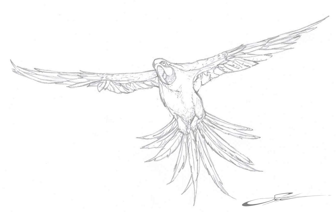 baby macaw coloring pages