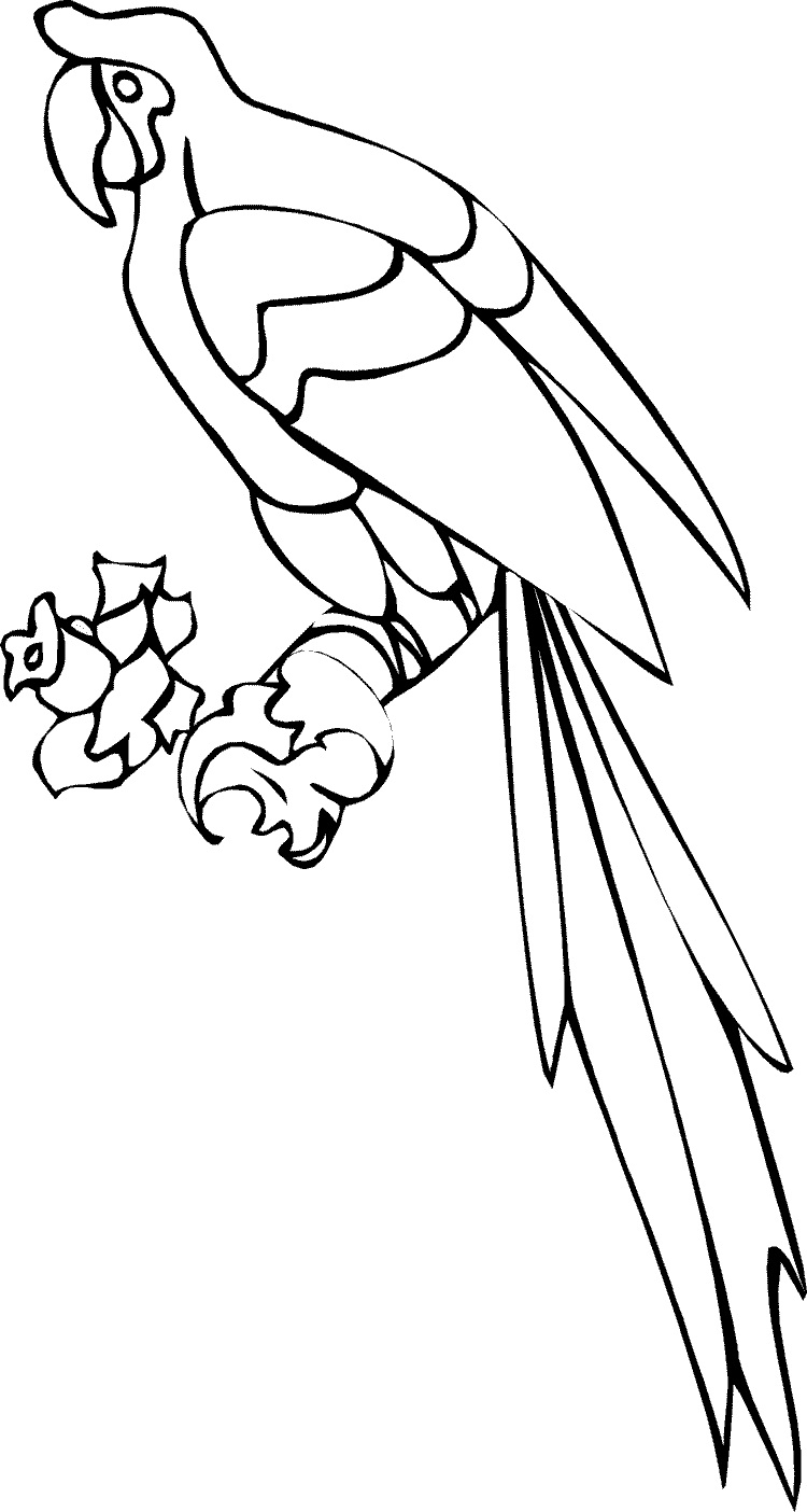free cockatoo coloring pages - photo#30