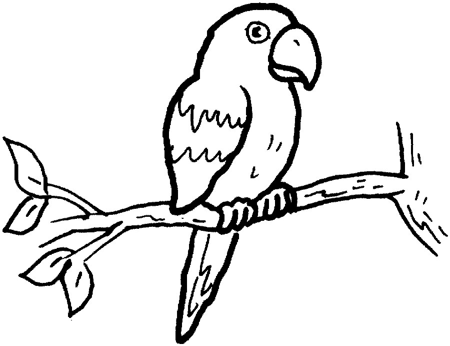 parrot coloring pages to print - Parrot Pictures To Color