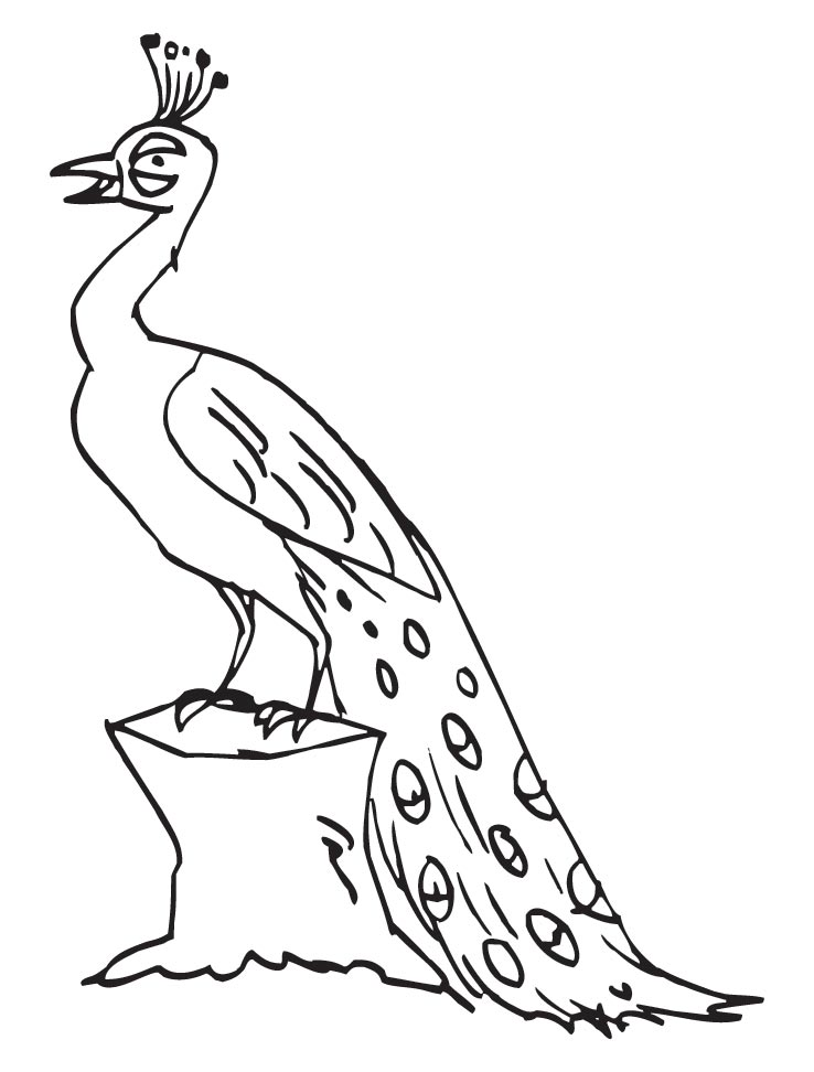 Peacock Coloring Page Photos