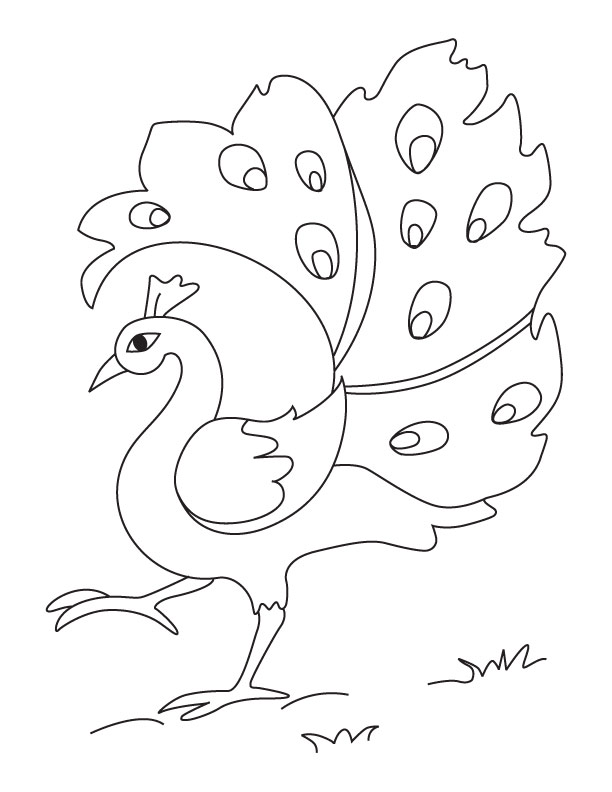Peacock Coloring Pages Pictures