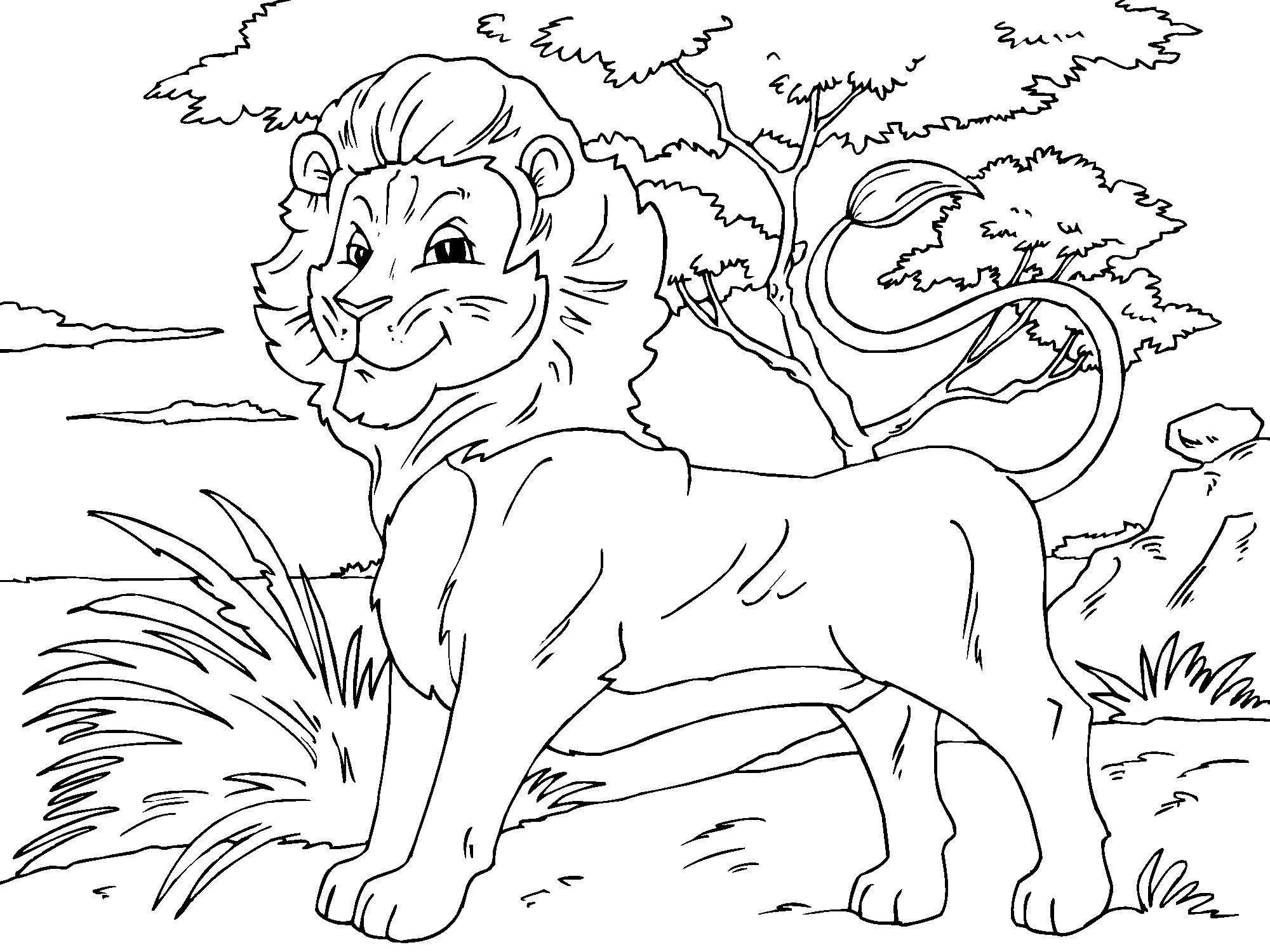 Coloring pages lion - Pictures Of Lion Coloring Pages