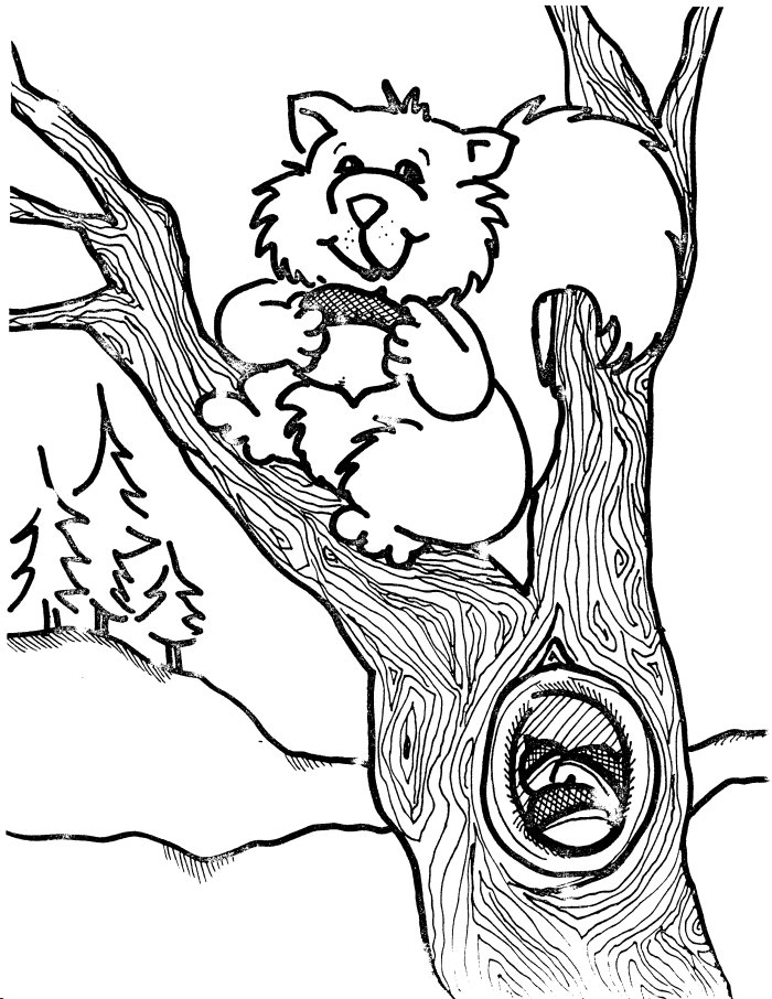 Pictures of Squirrel Coloring Pages