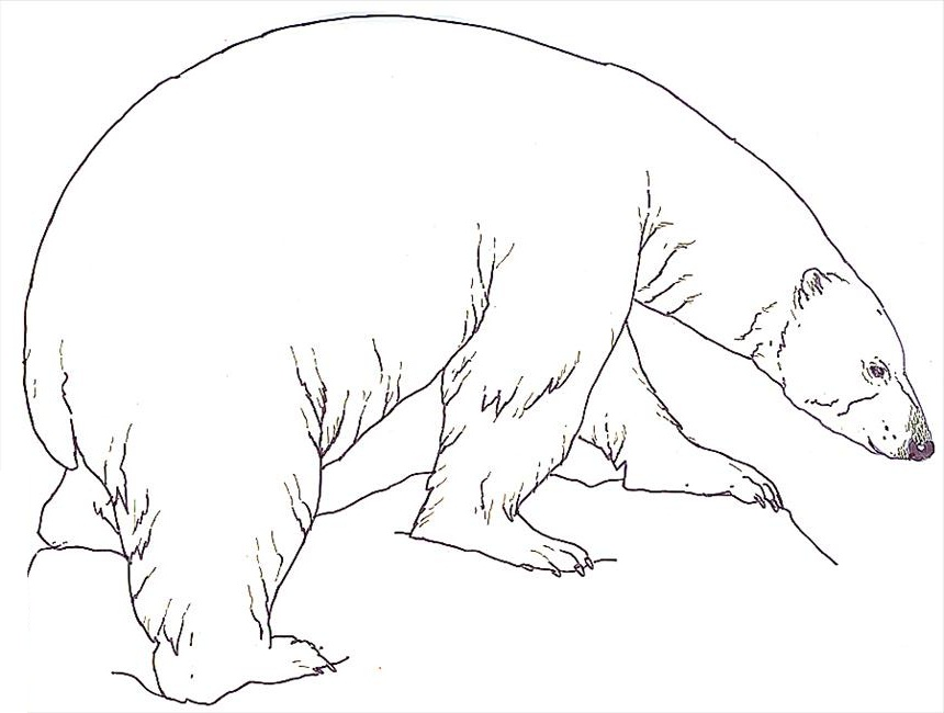Free Printable Polar Bear Coloring Pages For Kids Polar Bears Coloring Pages