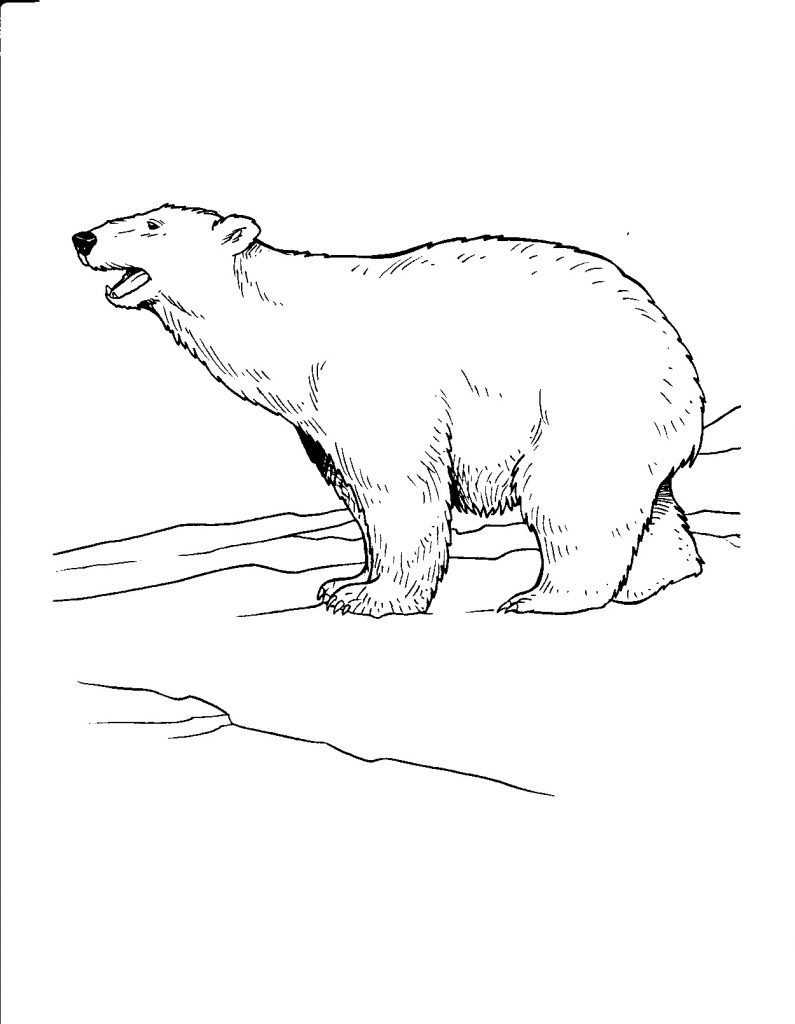 Polar animals coloring pages for kids - Polar Bear Pictures Coloring Pages