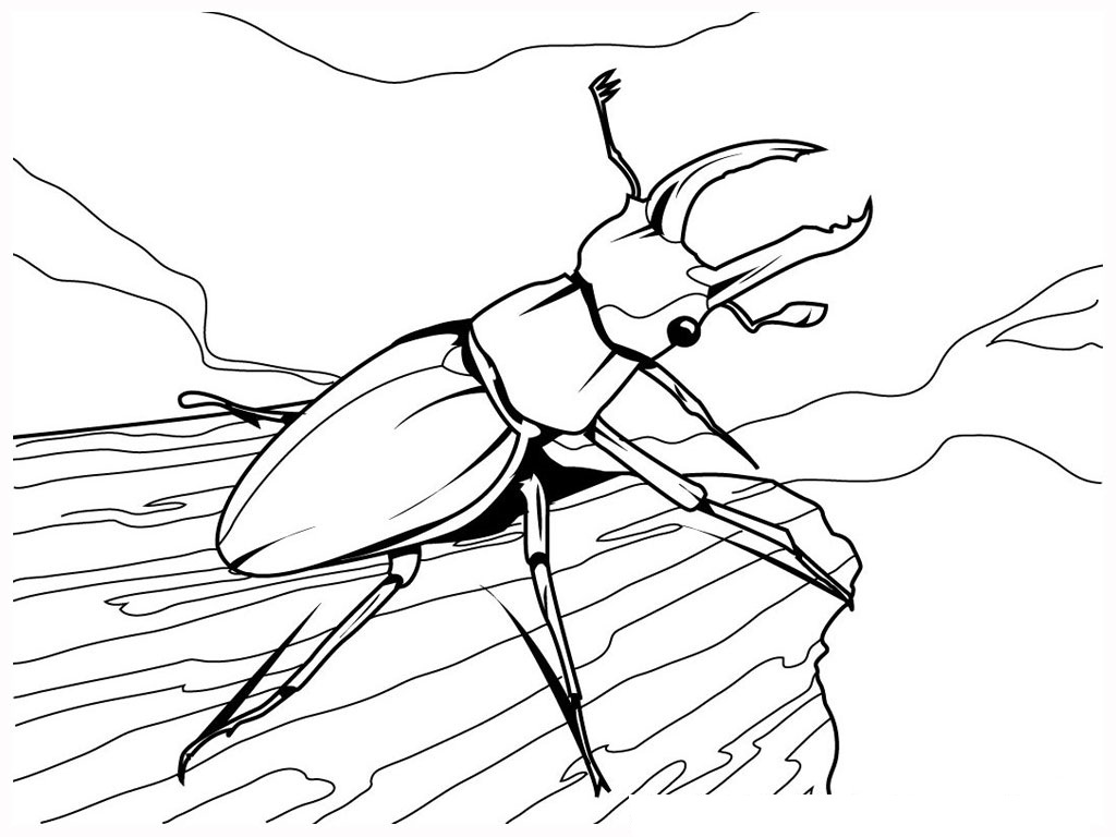 free printable bug coloring pages - photo#19