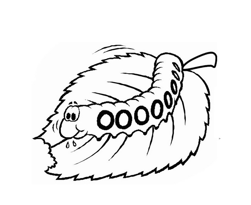 Printable Caterpillar Coloring Pages