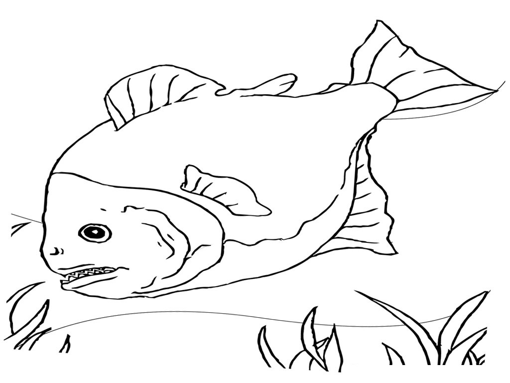 Free coloring pages fish - Printable Coloring Pages Fish