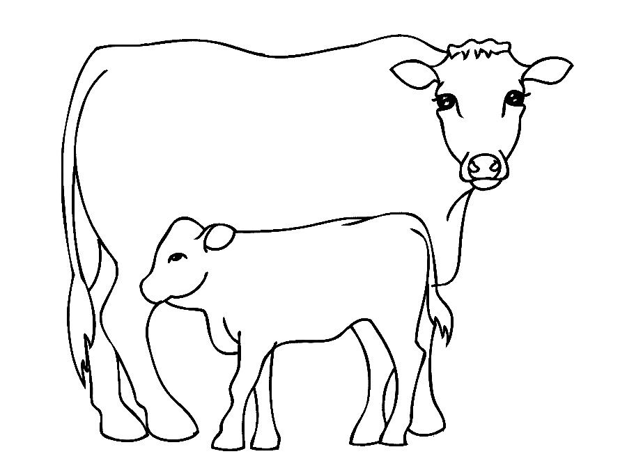 cow coloring pages print - photo#1