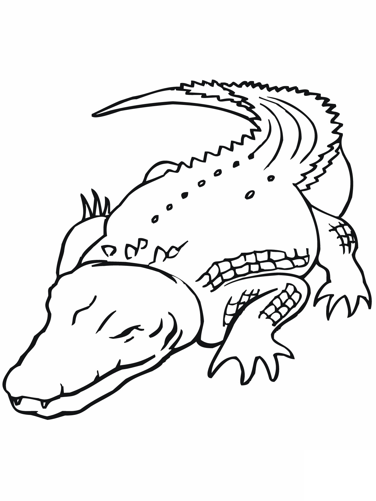 printable coloring pages crocodile - photo #25
