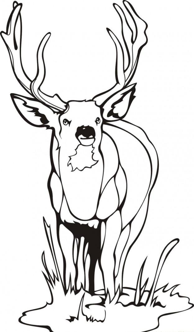 Free Printable Deer Coloring Pages